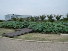 写真:二ツ寺親水公園